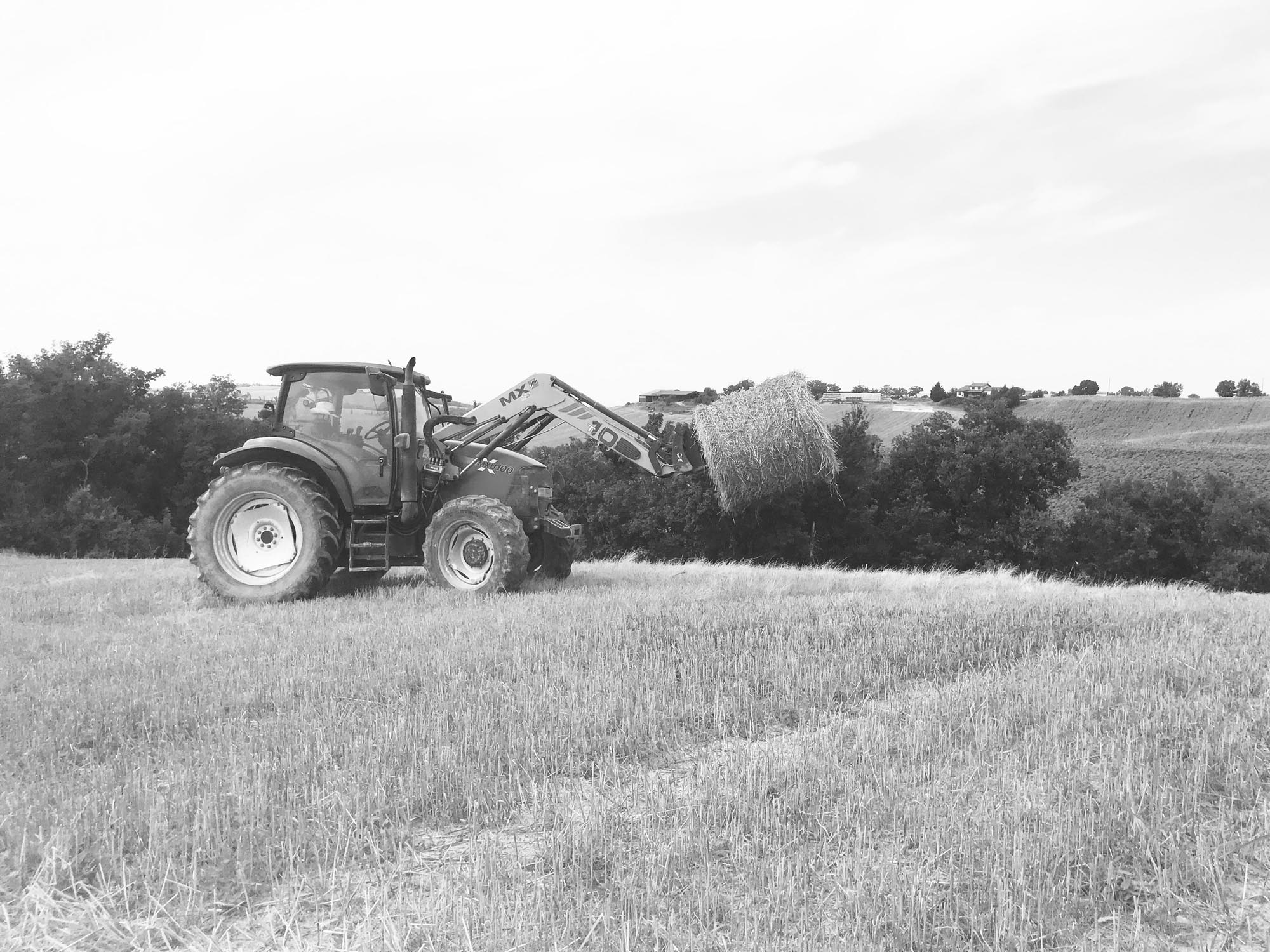 ferme-de-peyrot-vente-direct-viande-bovine-montgazin-haute-garonne-occitanieNB